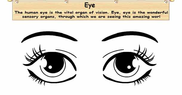 The most important sense is Sight